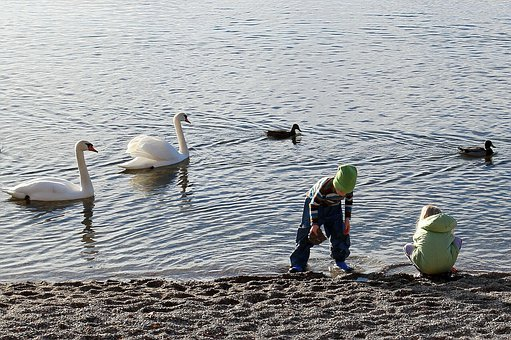 Nature, Water, Animals, Animal, Swan, Swans, Duck