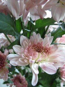 Flower, Pink, Petals, Yellow Heart, Flora, Plant