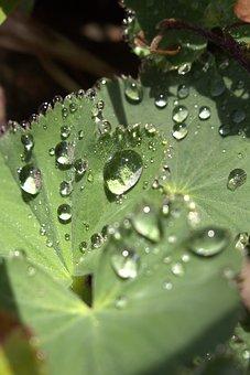 Dewdrop, Leaf, Close Up, Dew Drops On Leaf, Nature