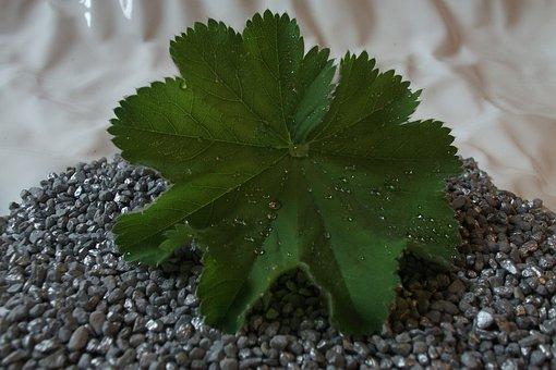 Dewdrop, Nature, Close Up, Dew, Drip, Dew Drops On Leaf