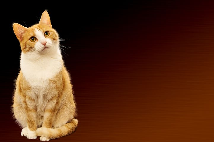 Cat, Background Image, Festive, Greeting Card, Map