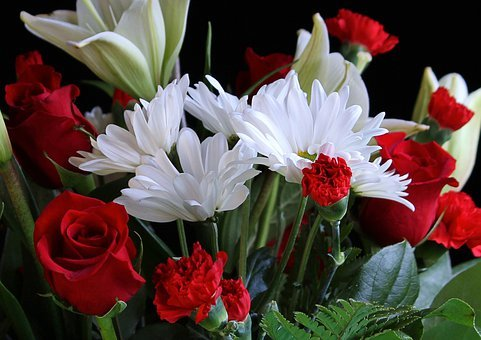 White Daisys, Red Carnations, Red Roses, Floral, Plant