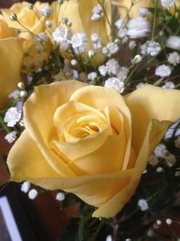 Yellow, Rose, Baby's Breath, Flower, Floral, Plant