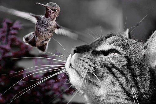 Cat, Bird, Hunting, Prey, Nature, Animal, Kollibri