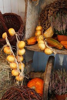 Autumn, Onion, Onions, Basket, Fall, Food, Harvest