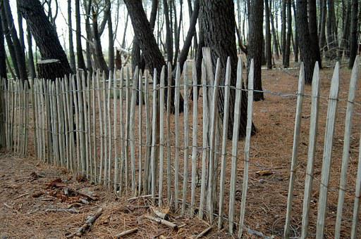 Forest, Landscape, Nature, Pineda, Screen Saver