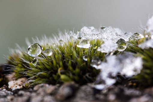 New Zealand, Moss, Winter, Snow, Cold, Transition