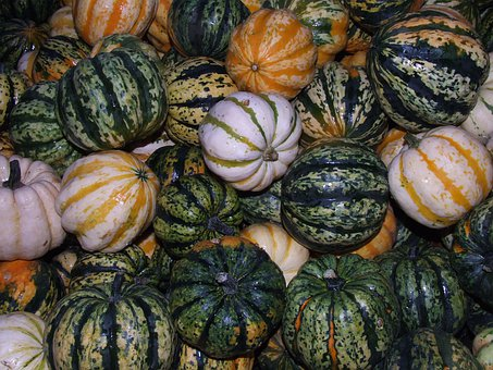 Pumpkins, Food, Harvest, Autumn, Blühendes Baroque