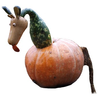 Pumpkin, Pumpkin Art, Blühendes Baroque