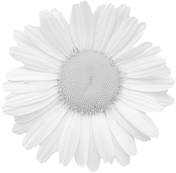 Blossom, Bloom, Graphic, Summer Flower, Colorless