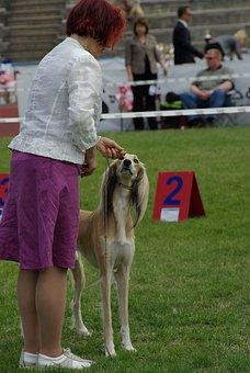 Dog Show, Dog, Animal, Hound