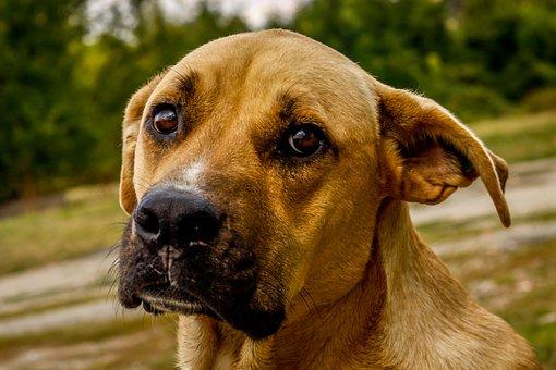 Dog, Puppy, Cute, Love, Animal, Adorable, Pet, Fur