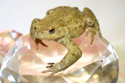 Toad, Frog, Amphibians, Creature, Close Up, Animals