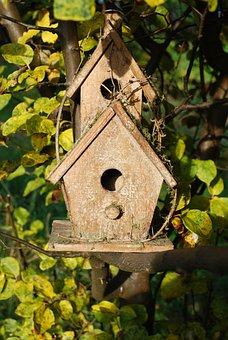 Aviary, Bird, Home, Tree, Autumn, Quince