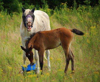 Horse, Foal, Thoroughbred Arabian, Mold, Brown Mold
