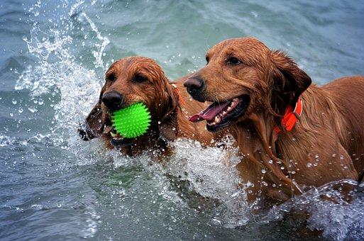 Dogs, Beach, Wet, Play, Summer, Pet, Canine, Water