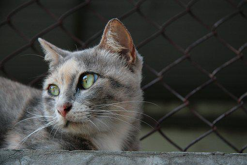 Cute, Yawn, Cat, Animal, Pet, Portrait, Domestic Cat