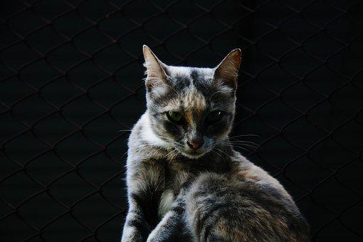 Face, Yawn, Cat, Animal, Pet, Portrait, Domestic Cat