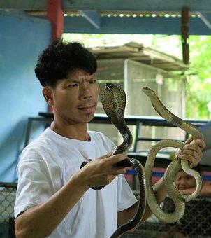 Cobra, Trainer, Snakes, Dangerous, Tower, Man