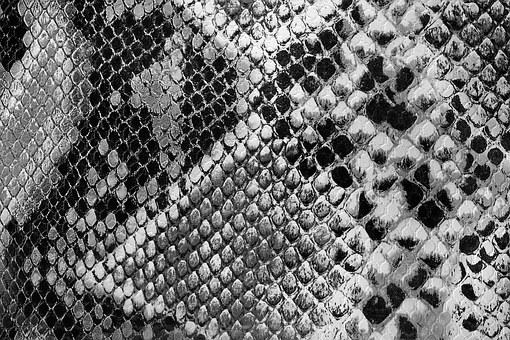 Backdrop, Black, Close-up, Cloth, Cobra, Cotton, Fabric