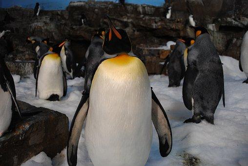 Penguins, Sea World, Seaworld, Cute, Cuddly, Funny