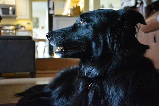 Dog, Black Dog, Puppy, Cute, Friend, Canine, Furry