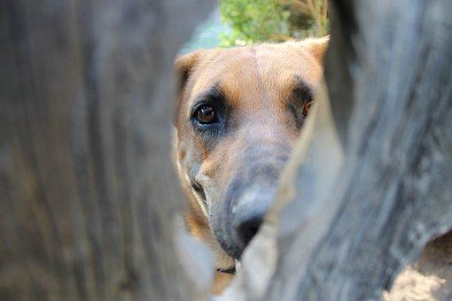 Dog, Knot Hole, Shepherd, Hound, Hole, Wooden, Pet