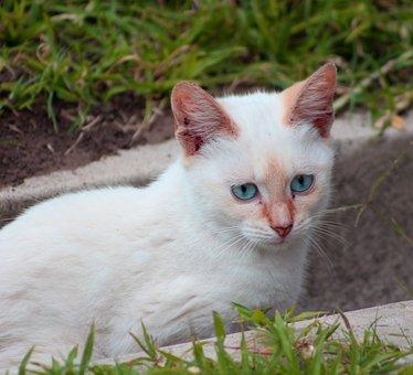 Cat, White, Pet, Kitten, Cute, Feline, Animal, Fur