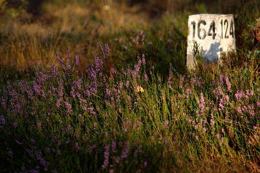 Heather, Forest, Nature, Autumn, Fleece, Bar, Digits