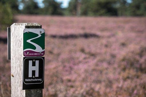 Heide, Erika, Migratory Character, Hiking, Heather
