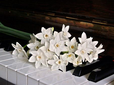 Piano, Keys, Jonquils, Flowers, Black, White, Notes