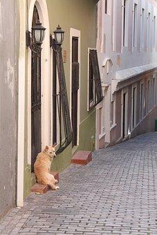 Dog, Mutt, Hound, Stray, Alley, Sad, Lonely, Lost