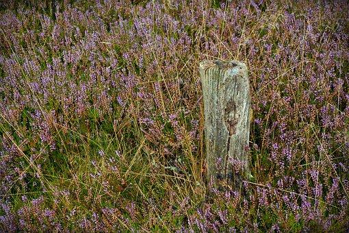 Heide, Pile, Nature, Heather, Lüneburg Heath