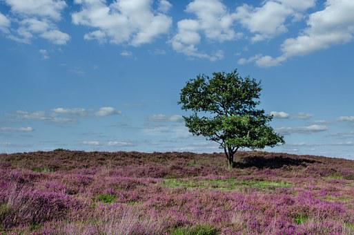 Tree, Heather, Moorland, Purple, Blue, Green, Nature