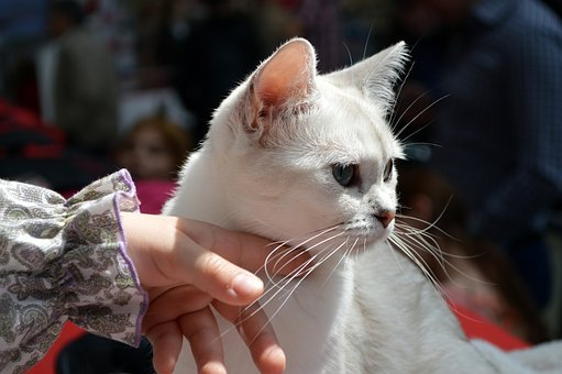 White, Cat, Fingers, Hand, Pet, Cute, Feline, Animal