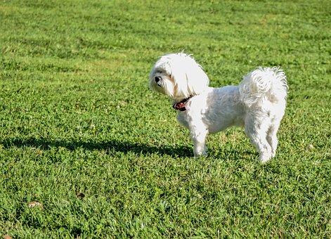 Dog, Grass, Quite, Puppy, Summer, Green, Lovely, Cute