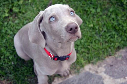 Dog, Puppy, Muzzle, Animal, Sweet, Eyes, Tenderness