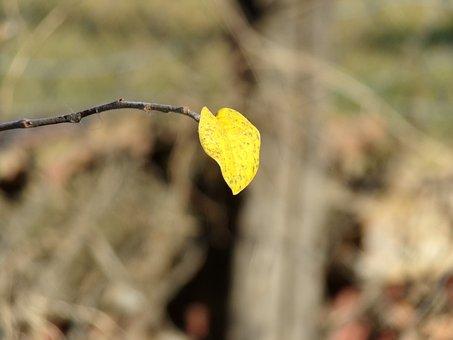 Foliage, Autumn, Last, Branches, Leaf Plants, Quince