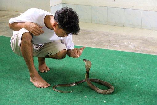 Snake, Trainer, Cobra, Dangerous, Tower, Man