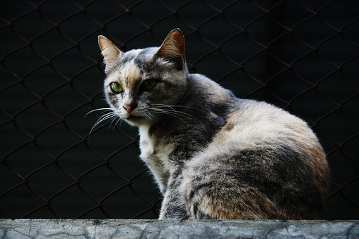 Nature, Yawn, Cat, Animal, Pet, Portrait, Domestic Cat