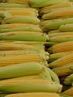 Corn, Corn On The Cob, Corn Kernels, Food, Eat