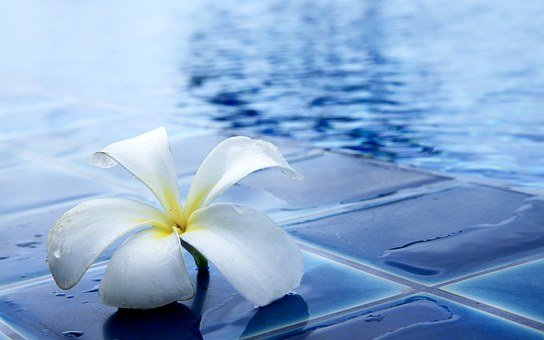 Flowers, Delightful, Refreshing, Swimming Pool, Water