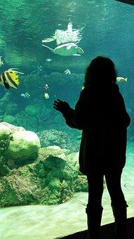 Aquarium, Girl, Fish, Looking, Daydream, Swim