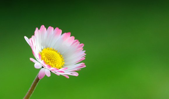 Flower, Color, Light, Closeup, Summer, Colored, Nature