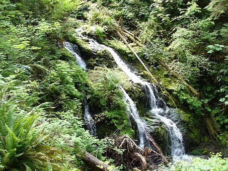 Waterfall, Lake Quinault, Nature, Vegetation, Water