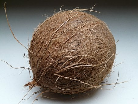 Coconut, Coconuts, Exotic, Sweet, Palm, Mediterranean