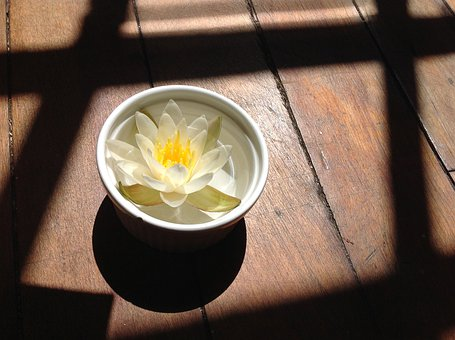 Water Lily, Lily, Bowl, Flower, Yellow, Shadow, Wood