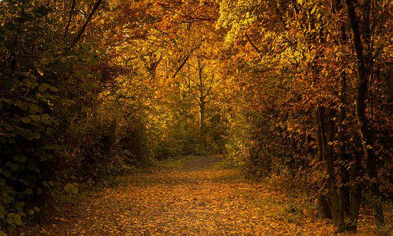 Autumn, Forest, Nature, Emotions, Sun, Blatter, Trees