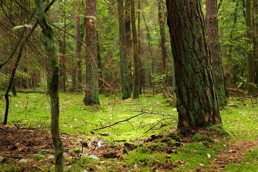 Forest, Magic Forest, Moss, Fairy Tale Forest, Nature
