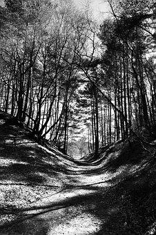 Heide, Forest, Nature, Fischbeker Heath, Landscape